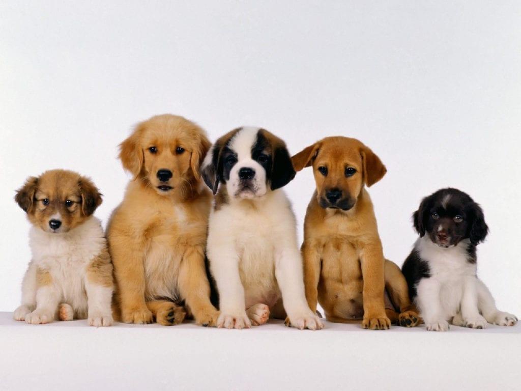 ideias de negócios lucrativos para 2020 laços para cachorros